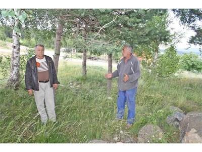 Радостин Кичуков и Камен Михайлов до ограбената и изоставена могила. Вдясно - карабеят може да се гледа само с лупа. Той е част от кехлибарена огърлица. СНИМКИ: АВТОРЪТ