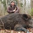 Дивите свине намаляха наполовина