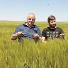Ангел и Димитър Вукодинови сред впечатляващото поле с ечемик Снимка: Андрей Белоконски