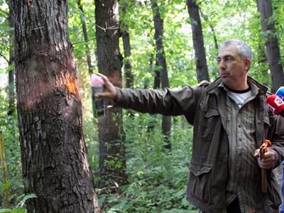 Опасните дървета в част от Борисовата градина бяха маркирани през лятото. СНИМКА: АРХИВ