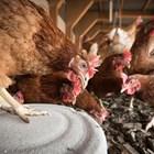 Химични дезинфектанти за помещенията на животните