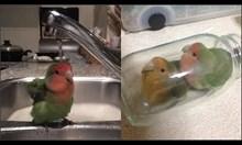 Смешни папагали