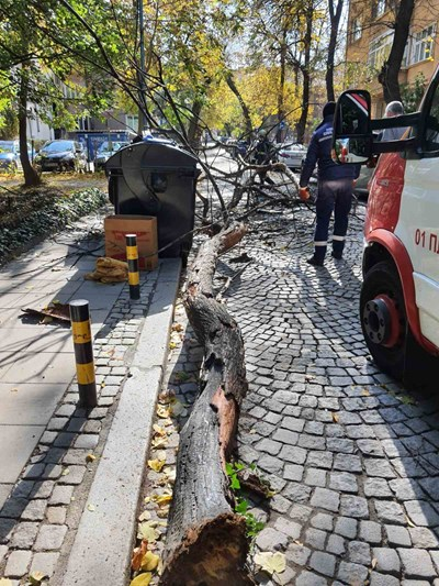"""Пожарната е дошла и бързо отстранила падналото дърво. Снимки: Фейсбук група """"Забелязано в Пловдив"""""""