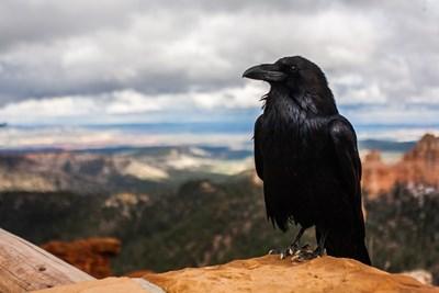 Враните притежават някаква форма на съзнание