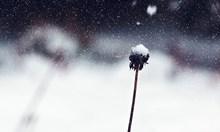 Днес ще е дъждовно, вечерта в цялата страна ще завали сняг