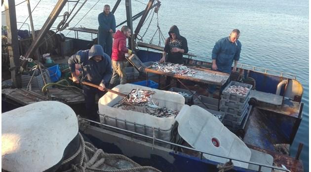 Изобилие от чернокоп по Южното Черноморие, най-евтиният по 4 лв./кг. (Снимки)