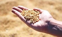 БАБХ следи фуражна суровина от Бразилия със съмнение за салмонела