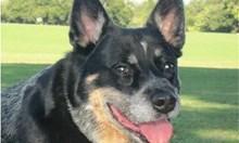 Кучета смъртници спасяват хора