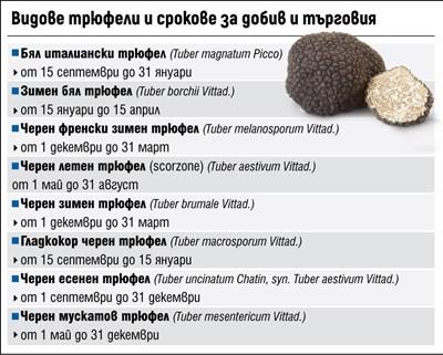 България изнася трюфели за 150 млн. евро годишно