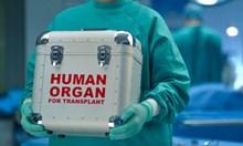 1137 българи чакат за трансплантация. Донорите - едва 11 тази година