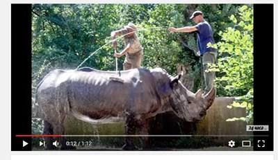 """Кадър от видеото """"Вижте как обгрижват животните в софийския зоопарк"""" в канала на """"24 часа"""" в ютюб"""