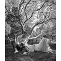 Дървото, под което е направена снимката на принц Хари и Меган Маркъл, е софора. Листата му имат вълшебни свойства и излъчват сладък аромат.