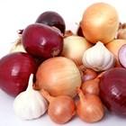 Новият лук е от родът Allium, който съдържа над 1000 растителни вида, сред тях са зеленият лук и чесън.