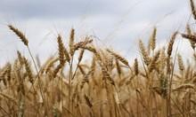 Силен ръст в аграрния сектор за Турция