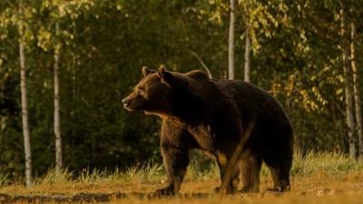 Аристократът гръмнал звяра в защитен резерват в Румъния, разследват случая, чака го сериозно наказание