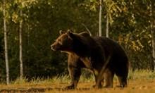 Скандал:най-голямата мечкав Европа убита отпринц на Лихтенщайн (Обзор)