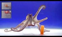 Експеримент с октопод и риба в бутилка