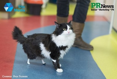 Кампанията с Пух - първата бионик котка, е номинирана за световна награда.