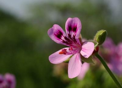 Градина: Грижи за цветята през октомври