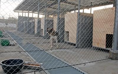 За три години АРС са намерили дом на над 2300 кучета и са кастрирали 5411 животни. Организацията полага грижи и за бездомни котки, които настанява в приемни домове. СНИМКА: Христо Рахнев