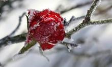 Студено утро днес - до минус 12 градуса, след обяд - слънчево