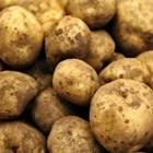 Ранните картофи се засаждат от края на февруари до средата на март