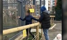 Маймуна в зоопарка в София пострада заради храна от посетители