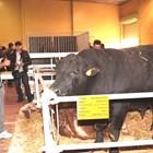 """Животновъдството е новият хит на Международната селскостопанска изложба """"Агра"""" и ще бъде представено по-мащабно в сравнение с предишните издания. Посетителите ще видят елитни бикове, а също - екземпляри от най-популярните породи говеда, овце и кози."""