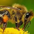 5 млн. лева за пчеларите по de minimis