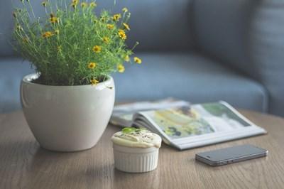 Градина: Растения, които чистят  вредни вещества от дома