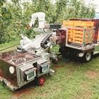 Робот събира плодовете в Япония