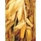 Царевичните какалашки превъзхождат царевичака, което ги прави добра съставна част дори на целодажбените гранули за преживни.