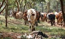 Ензими в кравешките търбуси разграждат пластмасата