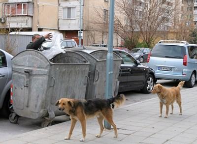 След кастрация кучетата ще се връщат на старите им места.