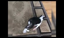 Куче се мисли за акула