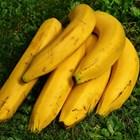 Бананите укрепват нервната система