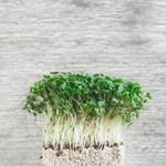 Невероятните ползи от растителните протеини