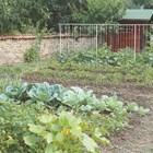 Колко да поливате различните видове зеленчуци