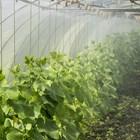 Отпада изискването за одобрение на проекти за строеж на оранжерии с площ до 1000 кв. м