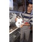 Как зайцевъдството ниизпадна от европазара