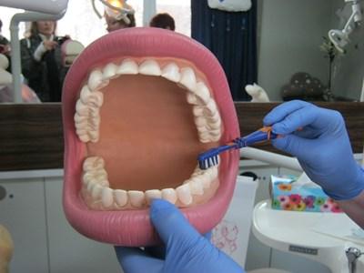 Детските зъболекари имат пособия, с които показват на малките правилата на добрата устна хигиена.  СНИМКА: АВТОРЪТ