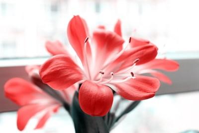 Градина: Цветя, подходящи за пушачи