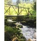 Сърцето ми е тук - в горите над Банско