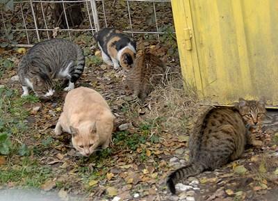 Над 2500 котки бяха обезпаризитени и кастрирани в Пловдив СНИМКА: Евгени Цветков