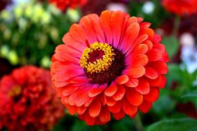 """През април и май се садят най-много цветя - и на открито в градината, и в саксии на балкона.  СНИМКИ: АРХИВ И """"24 ЧАСА"""""""