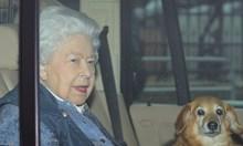 """""""Сън"""": Има положителна проба в Бъкингамския дворец, кралицата е била още там"""