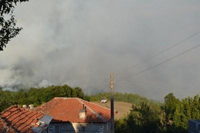 Пожарът в боровата гора край кирковското село Старово вече е локализиран. СНИМКА: Ненко Станев