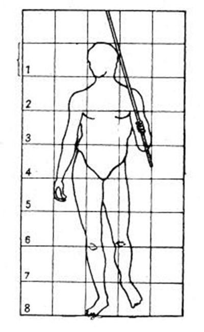 Графика с пропорциите на човешкото тяло