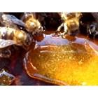 Затова, ако в гнездото храната е привършена, което е недопустимо при нормална подготовка и зазимяване, в замяна на празните пити на пчелите трябва да се дадат пити с мед от склада.