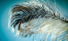 Птичите пера вдъхновяват ново поколение лепила и космически материали